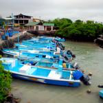 Fish market, Puerto Ayora, Santa Cruz Island, Galapagos Islands, Ecuador