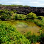 Salt-water lagoon, Isabela Island, Galapagos Islands, Ecuador