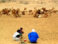 Ahmed and Mahmoud get directions from a local camel herder, Mauritania, Africa
