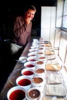 Tea tasting, Kijura Tea Company, Fort Portal, Uganda, Africa