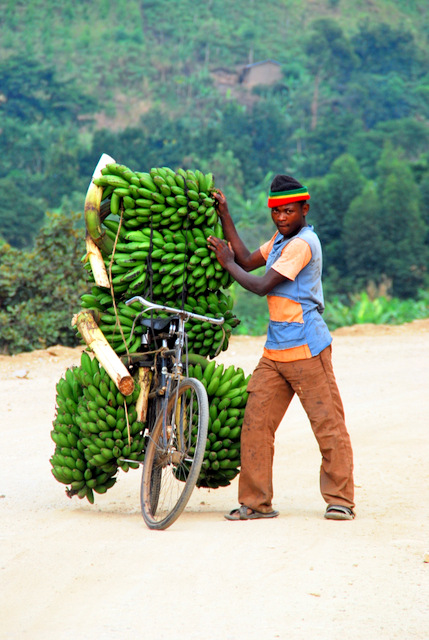 Matoke on their way to market, Fort Portal, Uganda, Africa